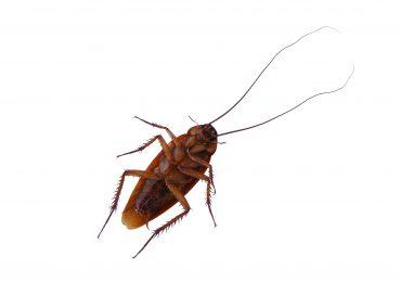 Чем затравить тараканов в квартире